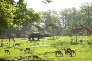 verschillende-dieren-in-dierentuin